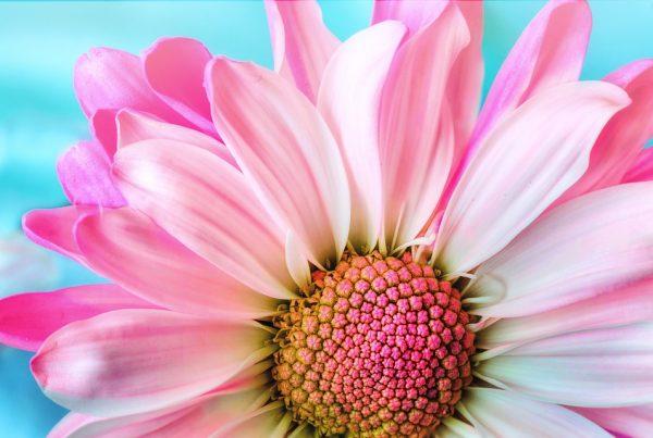 fleurs rituels anxiete